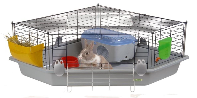 Кормление декоративного кролика