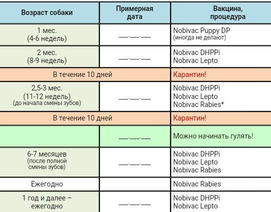 Прививки щенкам │ какие первые прививки нужны щенку │ до и после процедуры