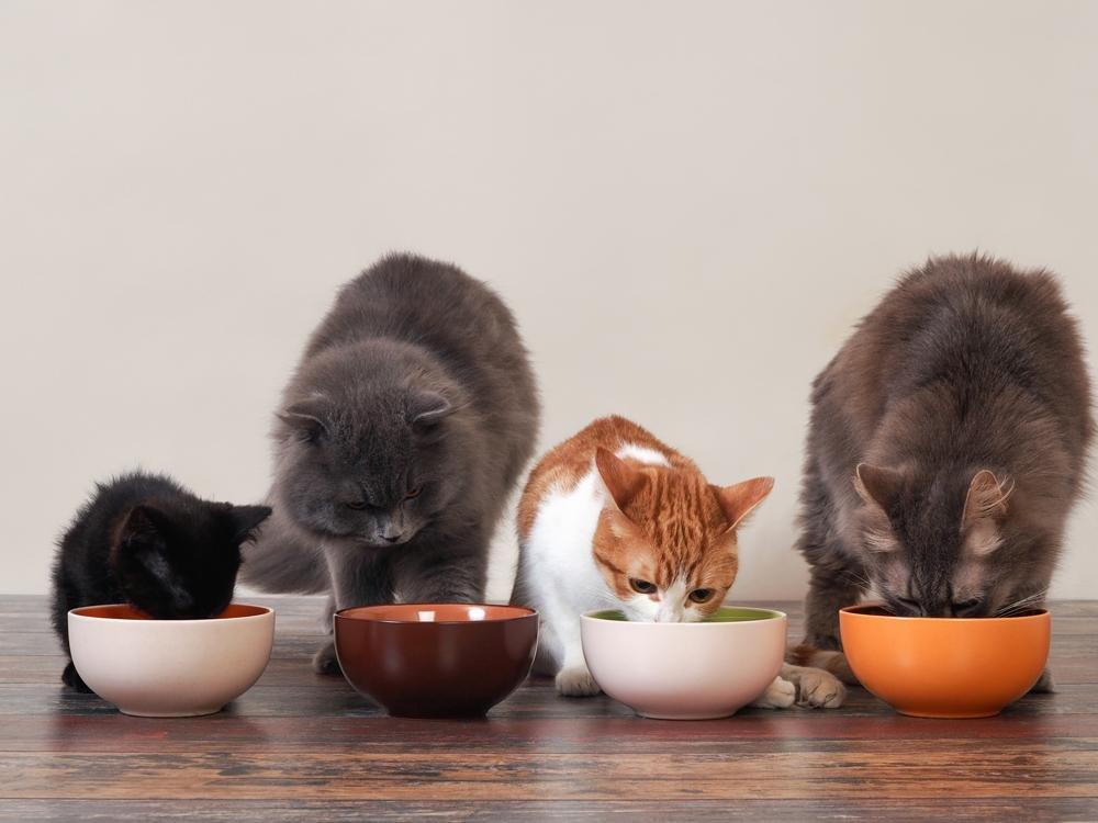 Как приучить кота есть все подряд. приучаем кошку к домашней еде: доводы в пользу здорового питания