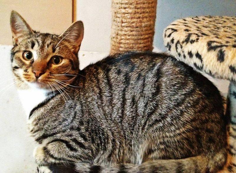 Окрас кошки: почему шерсть питомцев имеет разный цвет и рисунок, пятнистые и полосатые породы, черепаховые и мраморные коты, фото