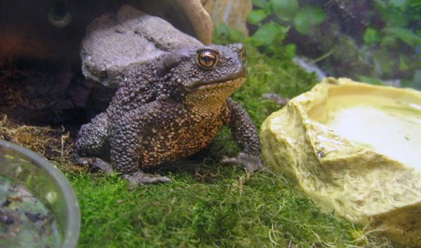 Жаба животное. описание, особенности, виды, образ жизни и среда обитания жабы | живность.ру