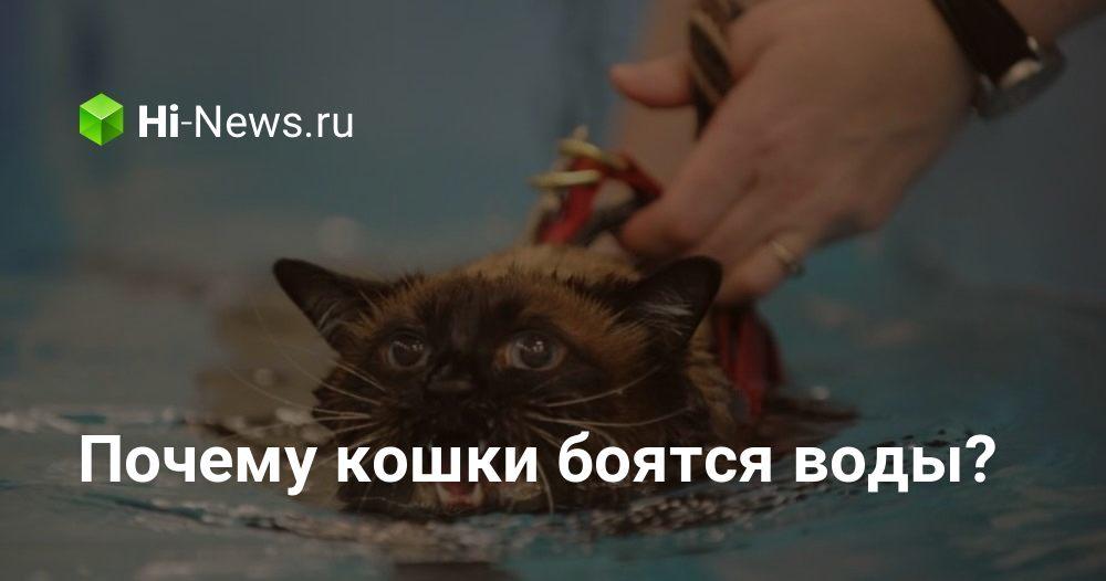 Почему кошка внезапно стала всего боятся?