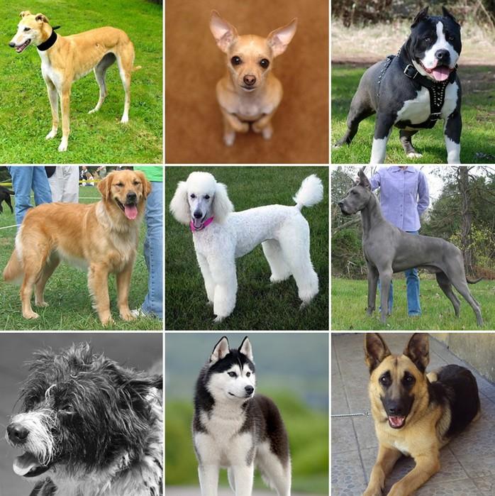 Собаки для квартиры лучшие породы | какую собаку лучше завести в квартире