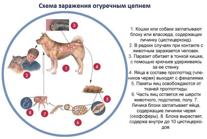 Токсоплазмоз, хламидиоз – болезни глаз у кошек: симптомы, лечение - донецкий ветеринарный диагностический центр