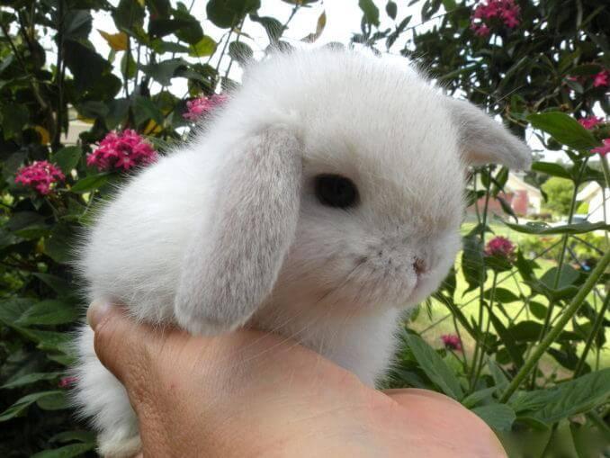 Какой кличкой назвать домашнего декоративного кролика