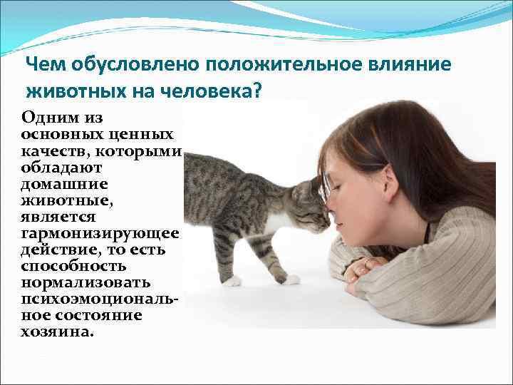 Как биополе собак и кошек влияет на человека - мои  любимые  котики - медиаплатформа миртесен