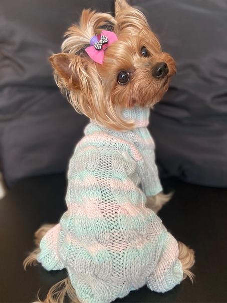 Вязаная одежда для маленьких собак — схемы спицами. как правильно снять мерки с собаки для вязания одежды? вязаная одежда для собак — как рассчитать плотность вязки и зачем это нужно делать?