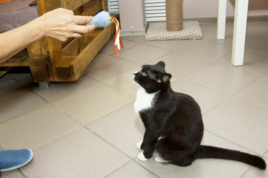 Как приучить кошку к новому котенку