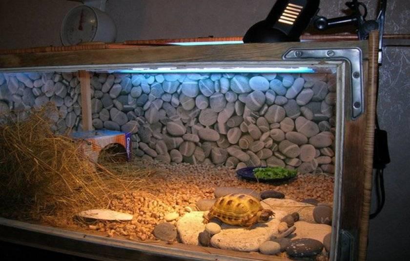 Террариум для сухопутной черепахи — какой должен быть