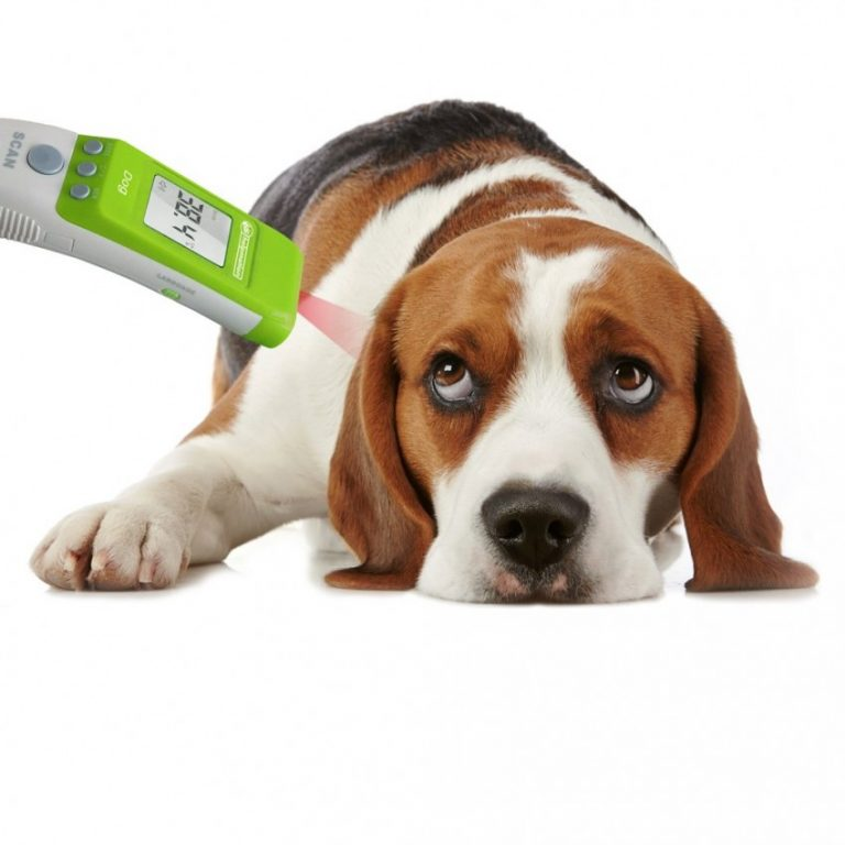Хозяину на заметку – как померить температуру собаке?