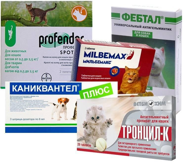 ????лучшие лекарства от паразитов для кошек на 2021 год