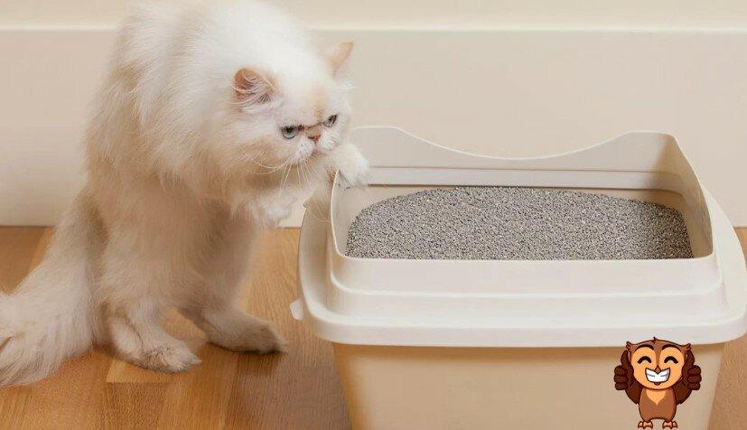 Кошка не ходит в лоток: что делать