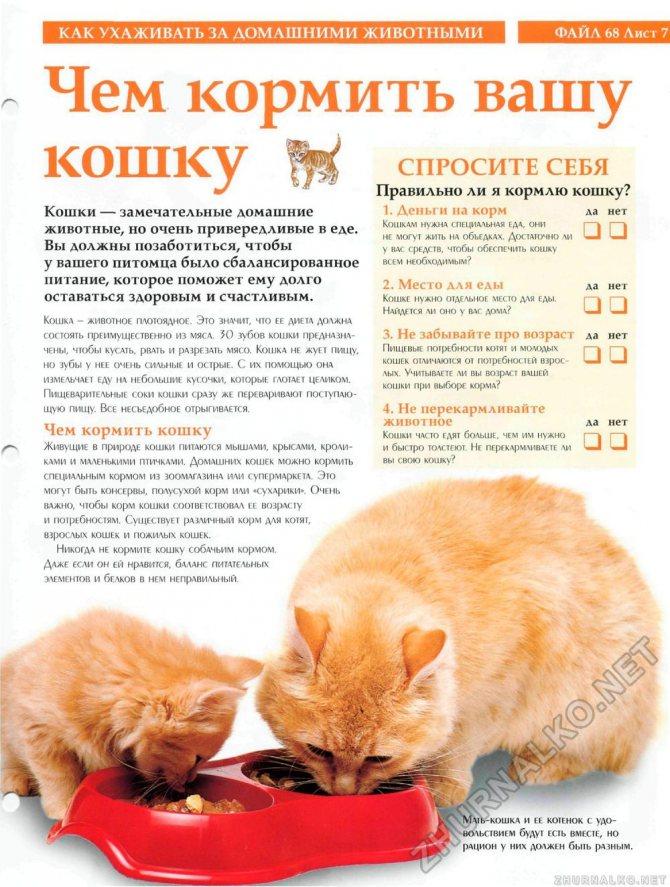 Кот дрожит как-будто ему холодно:норма или патология, как помощь, нужно ли лечение: объясняем обстоятельно