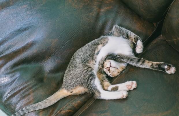 Нелепые позы, в которых спят кошки - так могут только они - gafki.ru