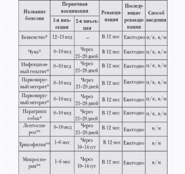 Прививки щенкам (собакам) до года: таблица, вакцины, подготовка и последствия