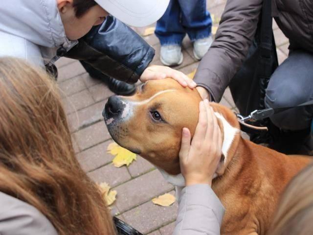 Почему собака вылизывает хозяина: основные причины