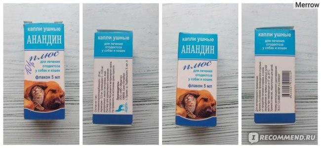 Лечение отодектоза (ушного клеща) у кошек в москве | ветеринарная клиника ирины оныщук