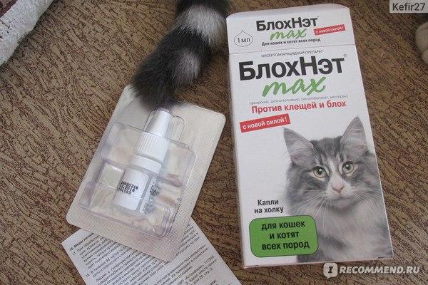 Капли от блох для кошек: рейтинг лучших, инструкция, отзывы владельцев