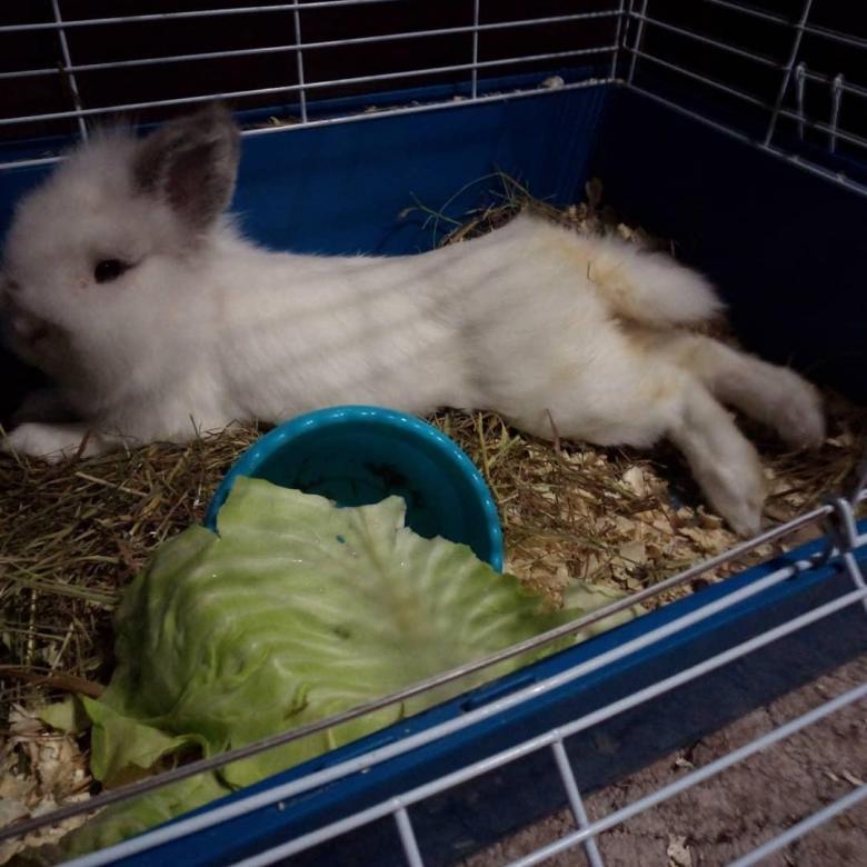 Сколько стоит декоративный кролик в зоомагазине