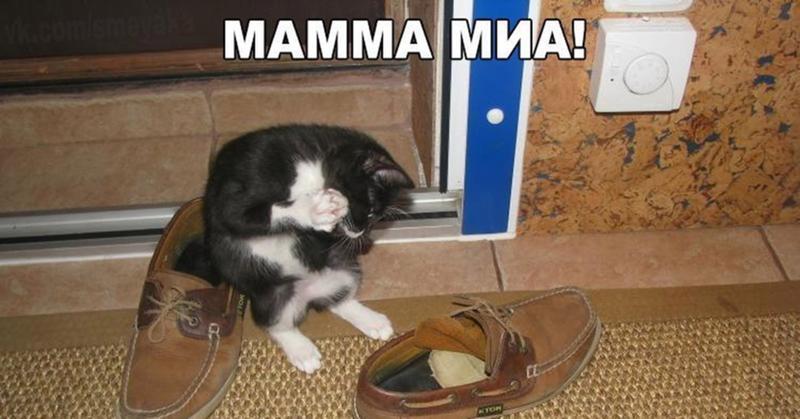 Как научить кота носить тапки