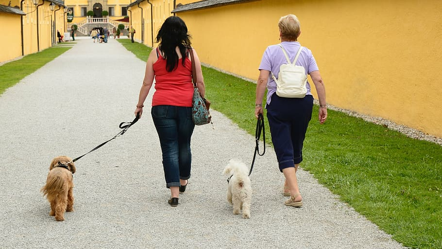 Когда лучше кормить собаку и щенка: до или после прогулки? кормление и выгул собак, основанные на разных принципах, советы хозяину