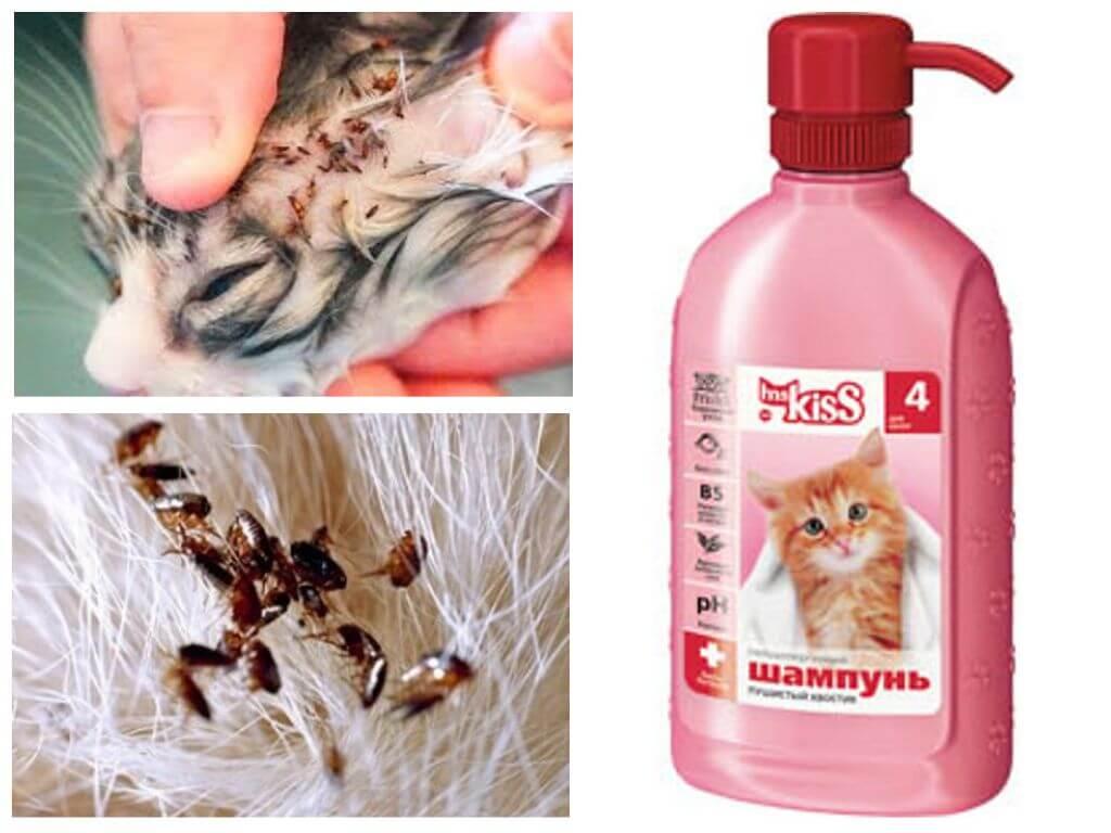 Учимся правильно выбирать шампунь для кошки и собаки