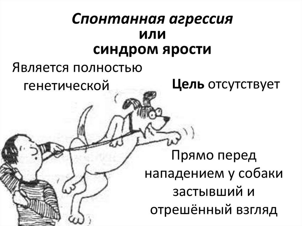Почему кошка нападает на хозяина - методы борьбы с агрессией - kotiko.ru