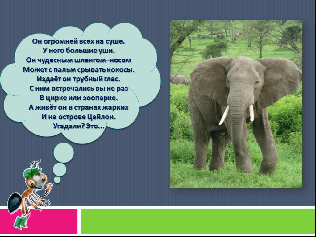 Как выглядят слоны разных пород и ареал их обитания