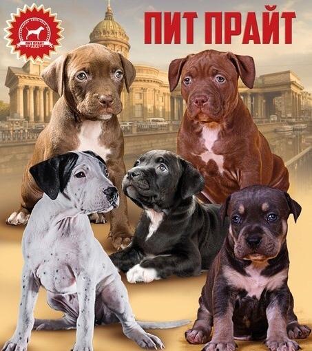 Хортая борзая собака. описание, особенности, виды и цена породы