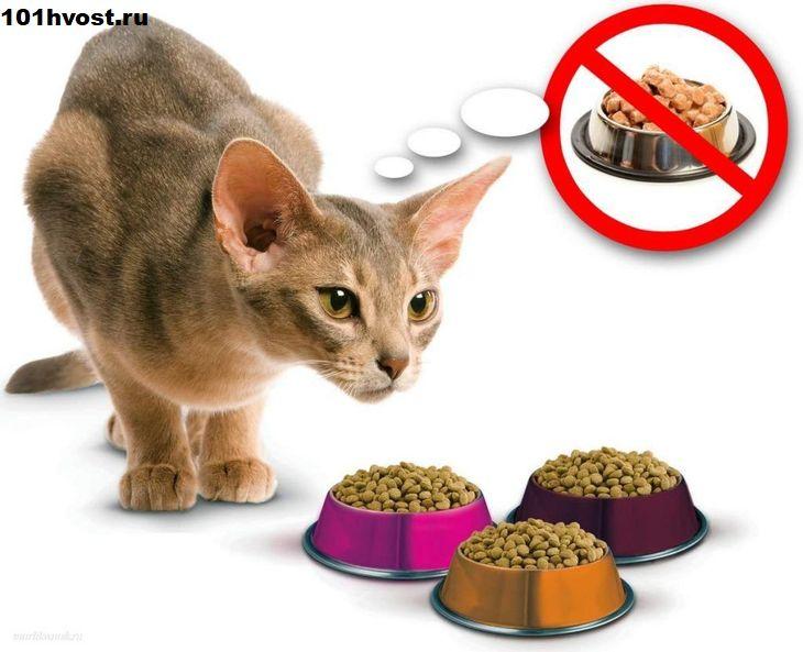 Каким кормом лучше кормить кошку советы ветеринаров: натуральный, сухой, влажный
