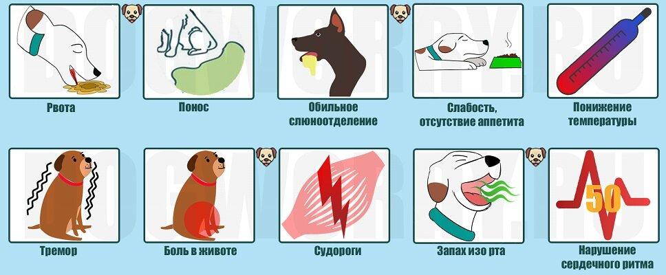 Котенок отравился: симптомы и самые первые признаки отравления. что делать, котенок отравился, оказание первой медицинской помощи