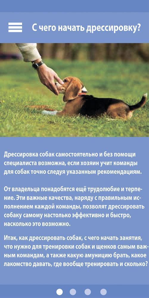 Как научить собаку команде лежать (+видео)