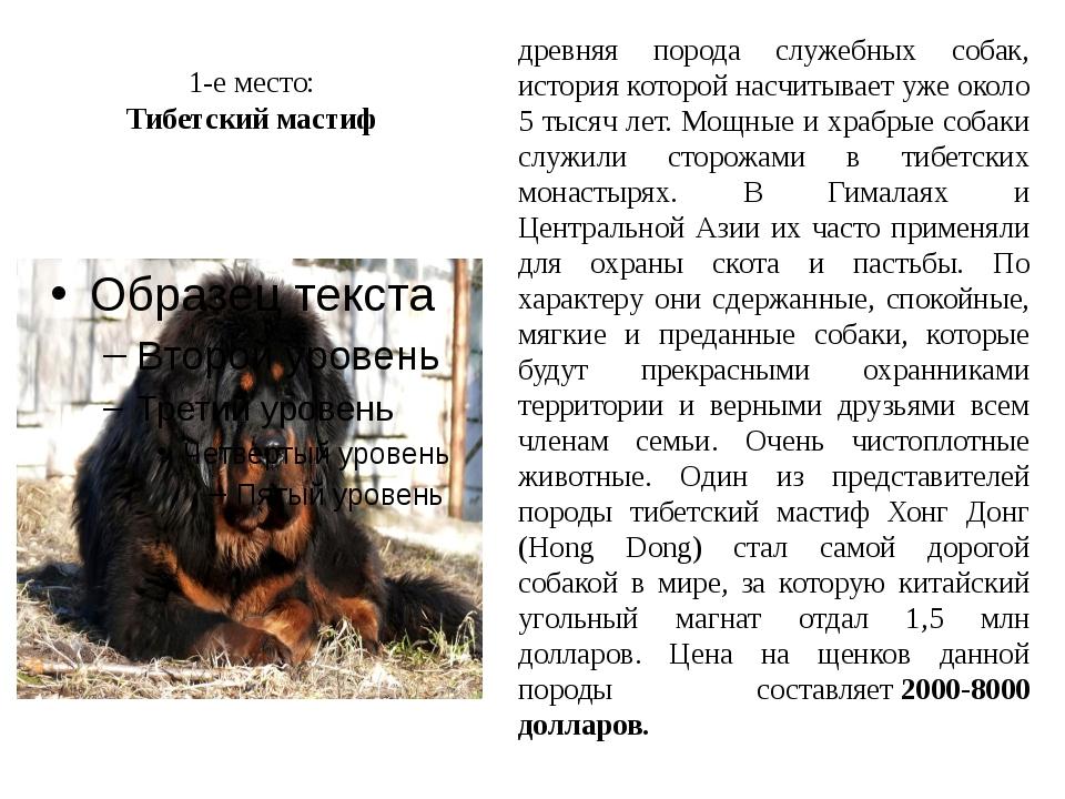 Тибетский мастиф (69 фото): характеристика породы. как выбрать щенков мастифа? как мастиф ладит с людьми?