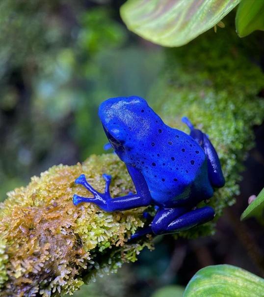 Лягушки: описание, виды, среда обитания, что ест, враги и образ жизни   планета животных