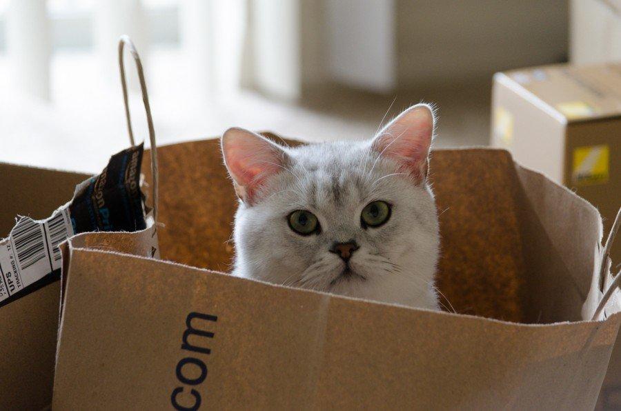 Загадочная история: почему все кошки любят коробки?