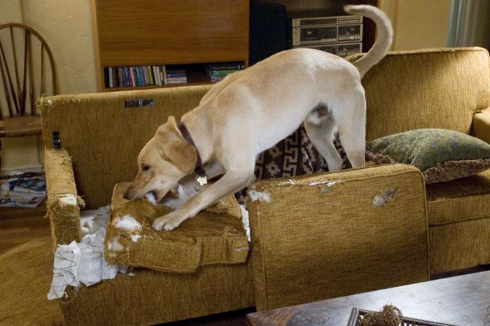 Как отучить взрослую собаку или щенка грызть все подряд