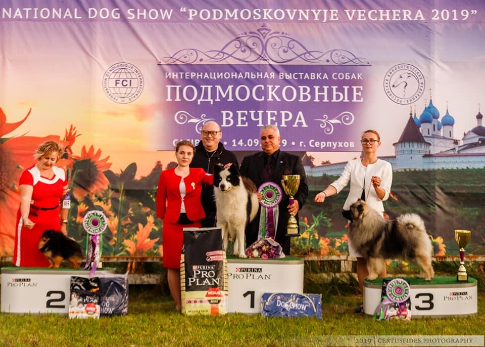 """""""фаворит-2021"""" выставка собак всех пород ранга сас чркф г. москва"""