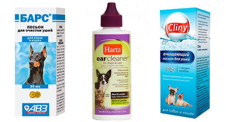 Как чистить уши собаке: частота и нюансы гигиенической процедуры