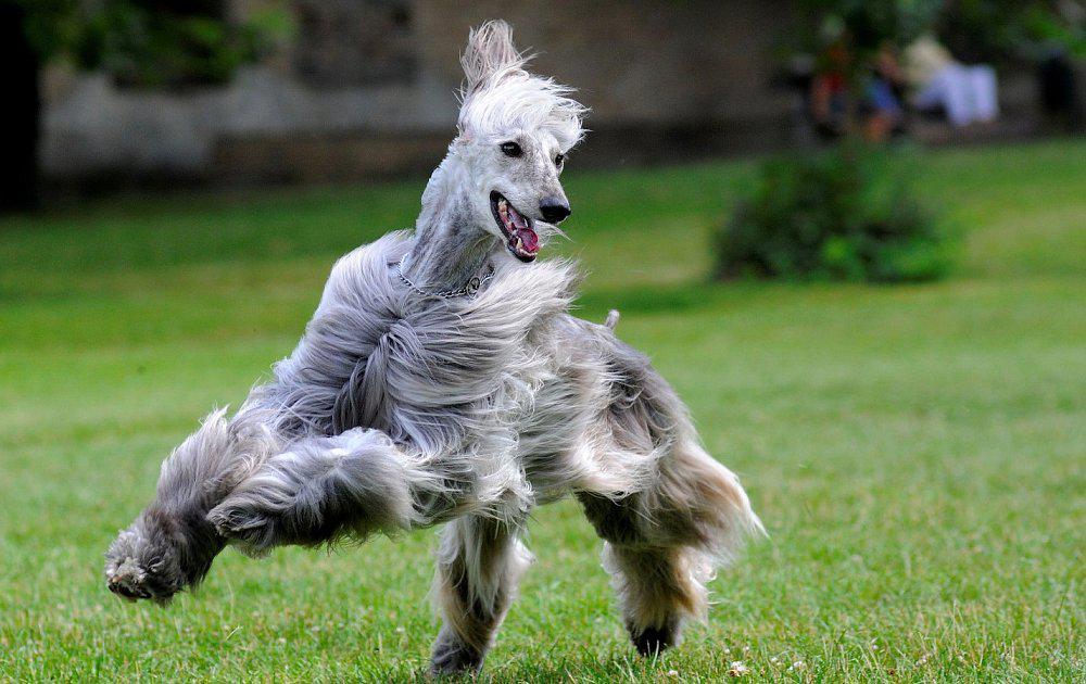 Топ-10 самых глупых пород собак в мире