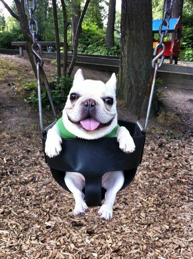 Самые смешные и забавные породы собак с фотографиями