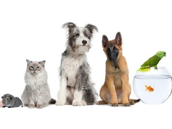 Какую породу кошек выбрать для квартиры и ребенка