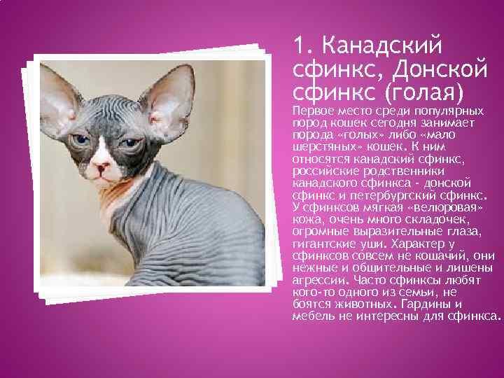 Донской сфинкс: описание породы с фото — pet-mir.ru