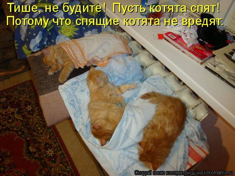 Кошка не дает ночью спать: как решить проблему?