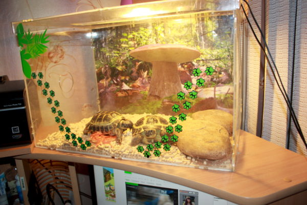 Террариум для сухопутной черепахи - все о черепахах и для черепах. как обустроить террариум для сухопутных черепах в домашних условиях